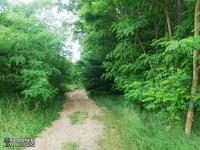 Piaszczyste leśne drogi