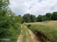 Polne drogi za Suliszowicami