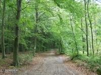 Droga leśna między Suliszowicami a Ostrężnikiem