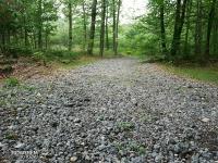 Kamienista droga leśna między Suliszowicami a Ostrężnikiem