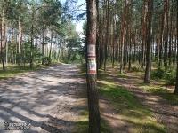 Droga leśna za Bobolicami