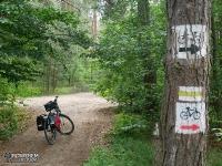 Droga leśna przed Górą Zborów