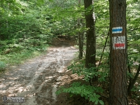 Trudne leśne drogi do Zamku Bąkowiec