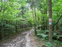 Leśna droga za Podzamczem