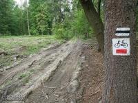 Rowerowy Szlak Orlich Gniazd - taka nawierzchnia! Lasy za Smoleniem