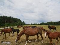 Stadnina koni w Krzywopłotach