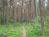 Leśna ścieżka na Szlaku Orlich Gniazd