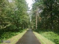 Droga asfaltowa w Tenczyńskim Parku Krajobrazowym