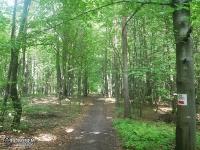 Leśne drogi Tenczyńskiego Parku Krajobrazowego