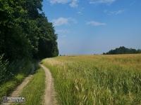 Polna droga przed Balicami