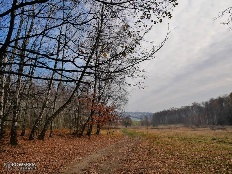 Leśna polana między Kochłowicami a Halembą