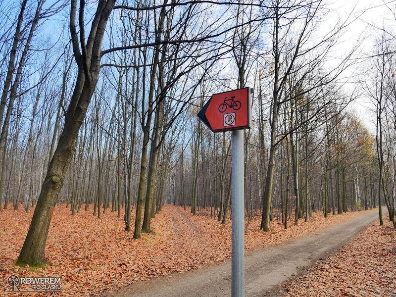 Leśny odcinek Rudzkiej Obwodnicy Rowerowej