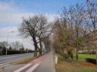 Droga rowerowa przez Rudę