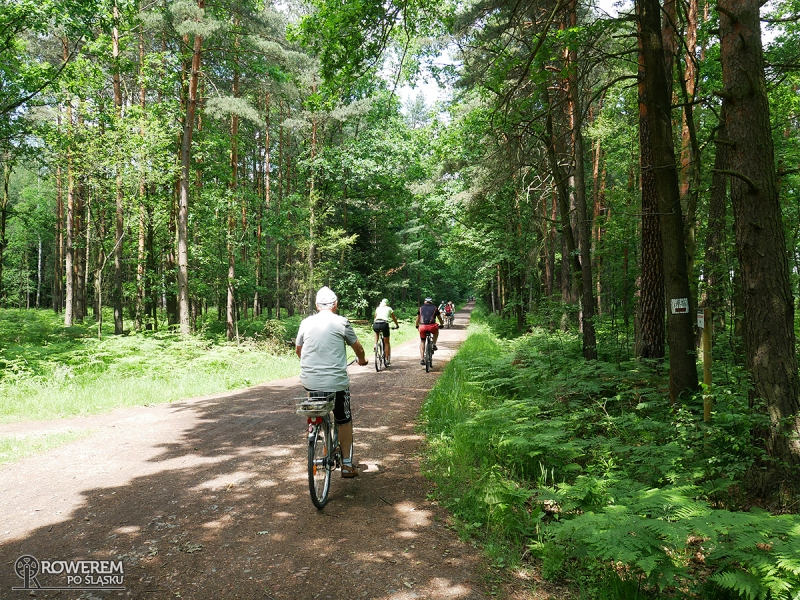 Leśne drogi na Paprocanach