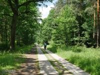 Leśna droga między Kobiórem a Piaskiem