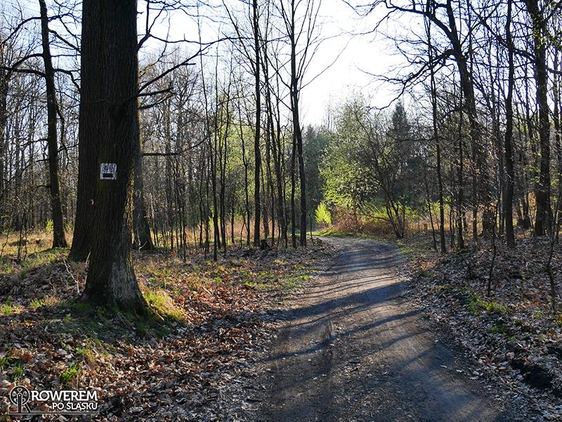 Lasy Panewnickie