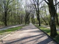 Park Śląski - aleja Klonowa