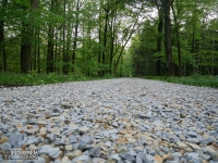 kamienista leśna droga