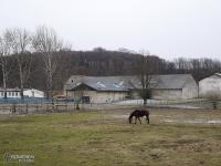 Stadnina koni w Dziećkowicach