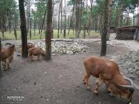 Mini zoo - Park Kuronia w Sosnowcu