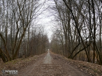 Las Zagórski w Sosnowcu