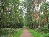 Lasy Kobiórskie