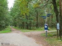 Skrzyżowanie szlaków w Lasach Kobiórskich