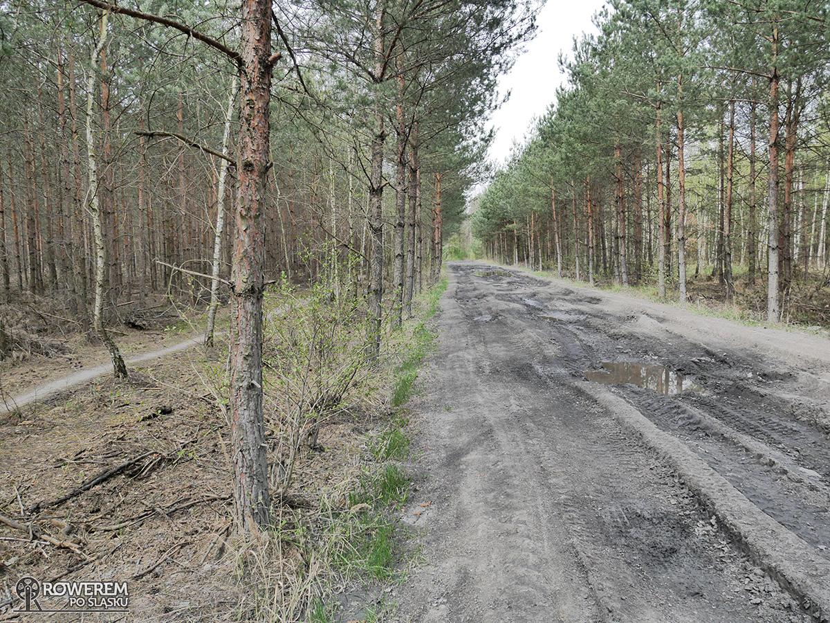 Słaba droga leśna - Makoszowy