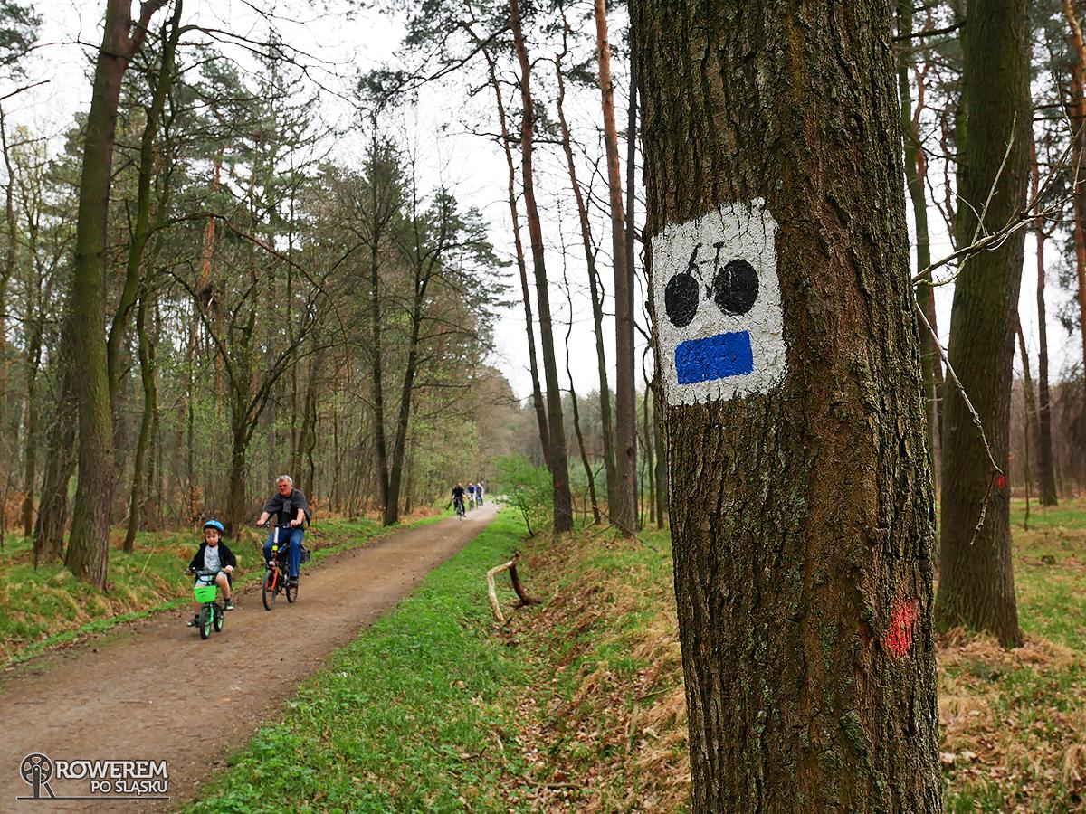 Ruch rowerowy na szlaku