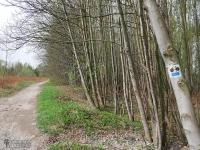 Droga leśna między dzielnicą Kończyce a Makoszowy