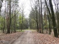 Szlak w Lasach Makoszowskich