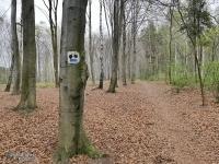 Lasy w dzielnicy Maciejów