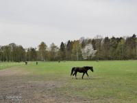 Stadnina koni przy Kąpielisku Leśnym