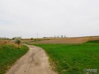 Łąki i pola w Grzybowicach