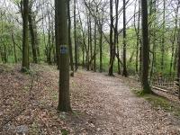 Lasy w Rokitnicy