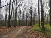 Las w Miechowicach