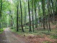 Leśna droga między Złotym Potokiem a Ostrężnikiem