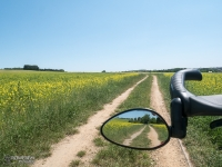 Polna droga do Podzamcza