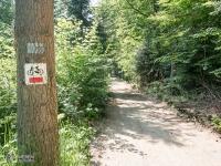 Leśny odcinek za Smoleniem