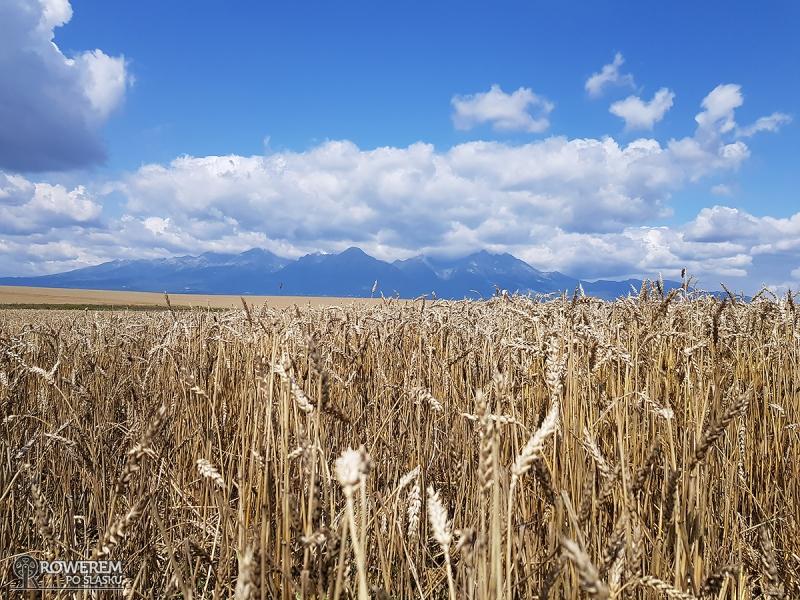 Pola zbóż i Tatry w tle! Piękna sceneria!