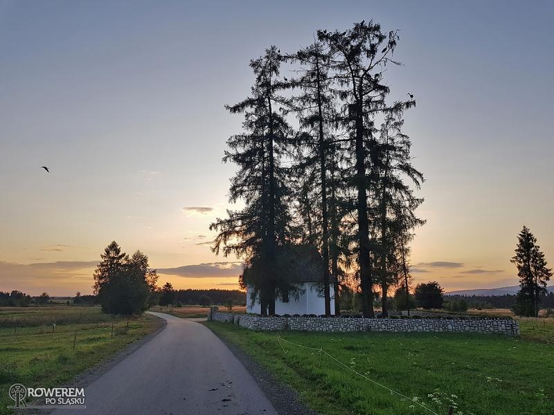 Zobaczcie ile na tym drzewie siedzi bocianów! Tak to bociany!