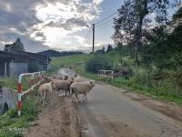 W górach nie mogło zabraknąć zdjęcia z owcami