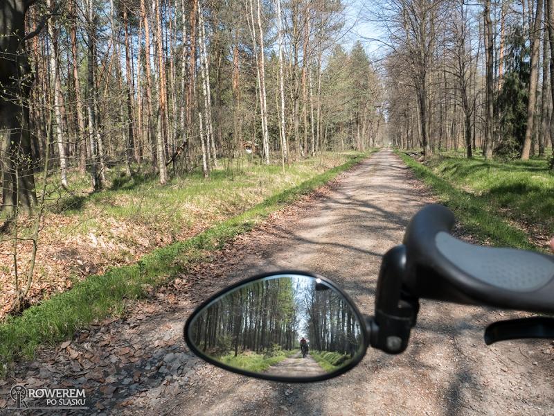 Zabrzeg - droga leśna