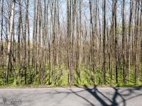 Piękne lasy wzdłuż ul. Bielskiej