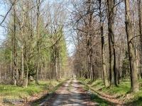 Las w Zabrzegu
