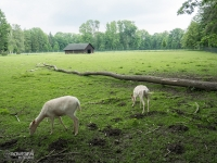 Zoo w Parku Bożeny Nemcovej