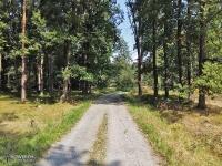 Lasy w okolicach Zaborza