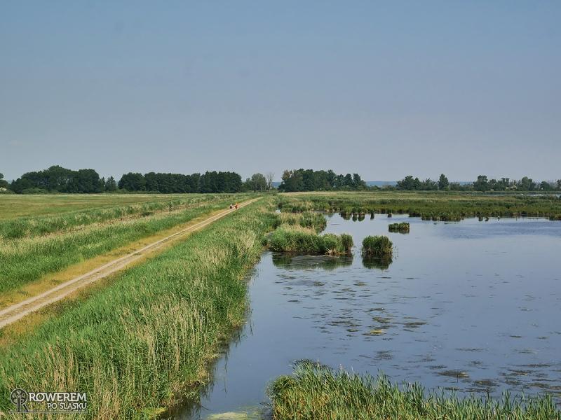 Rezerwat Przyrody Anklamer Stadbruch