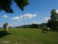 Stadnina koni przed Tanvaldem