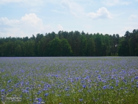 Kolorowe łąki